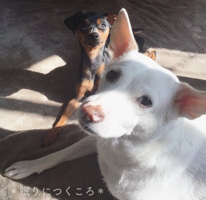 f:id:sd_marisuke:20171214122016j:plain