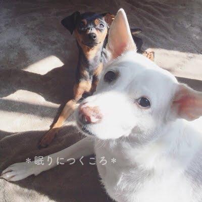 f:id:sd_marisuke:20171219194021j:plain