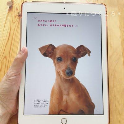 新型iPadのkindleアプリでミニチュアピンシャーと暮らすを読む