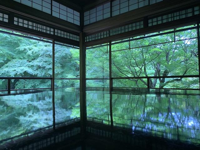 瑠璃光院・青葉・春の拝観(iPhoneXSで撮影。加工なし。)