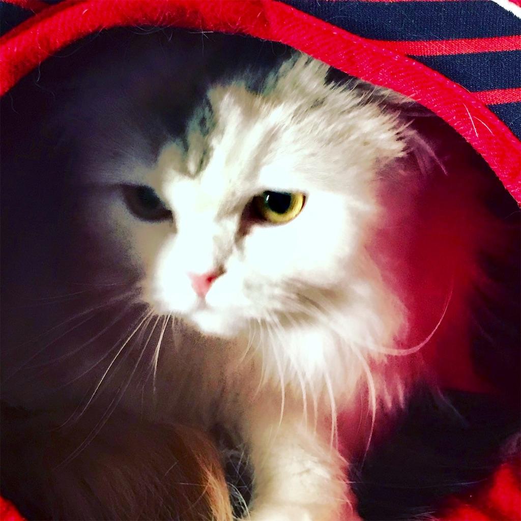 f:id:sea-cat0718:20190130131152j:image