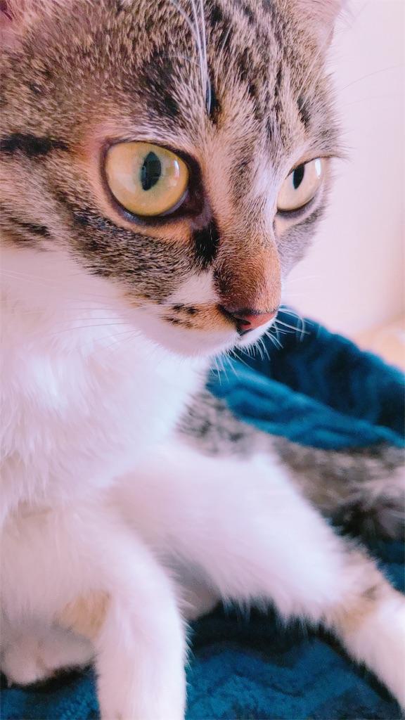 f:id:sea-cat0718:20190130133020j:image