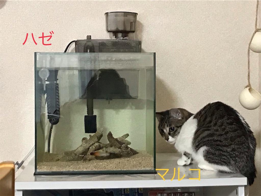 f:id:sea-cat0718:20190201051055j:image