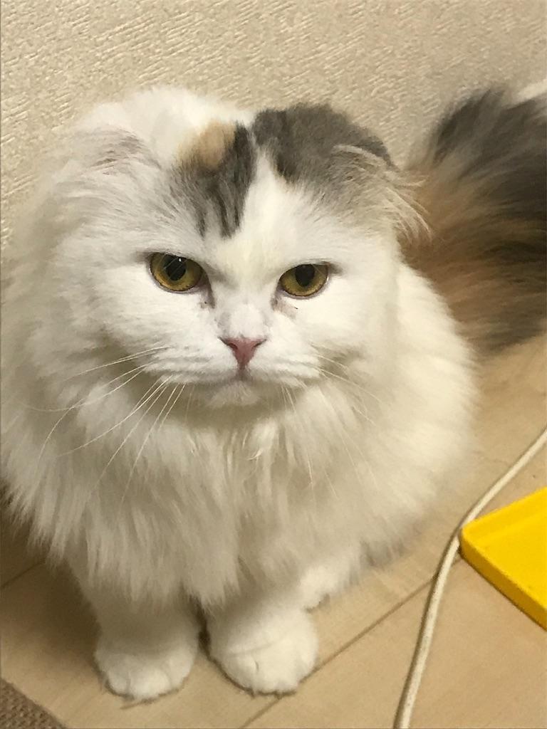 f:id:sea-cat0718:20190205175953j:image
