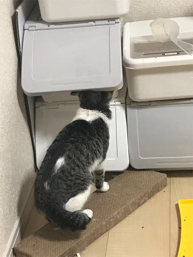 f:id:sea-cat0718:20190211185850j:image