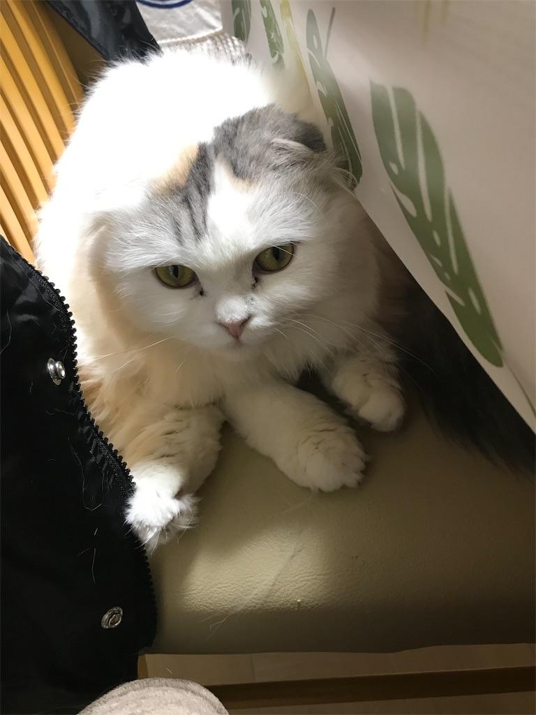 f:id:sea-cat0718:20190217172739j:image