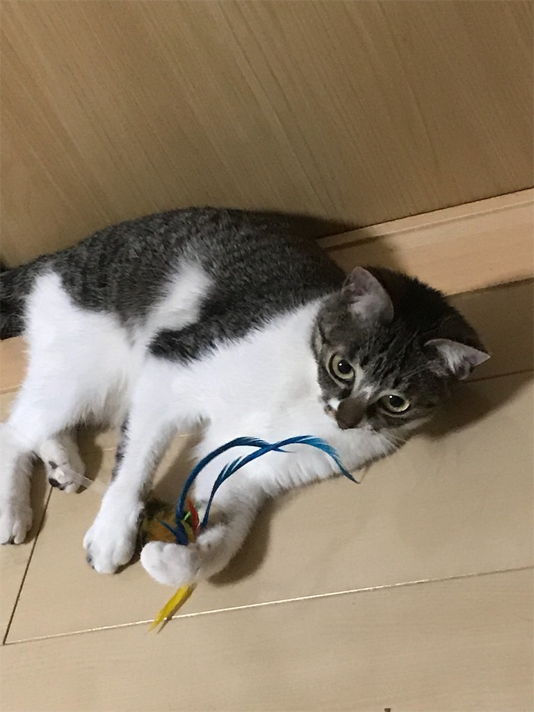 f:id:sea-cat0718:20190306230100j:image