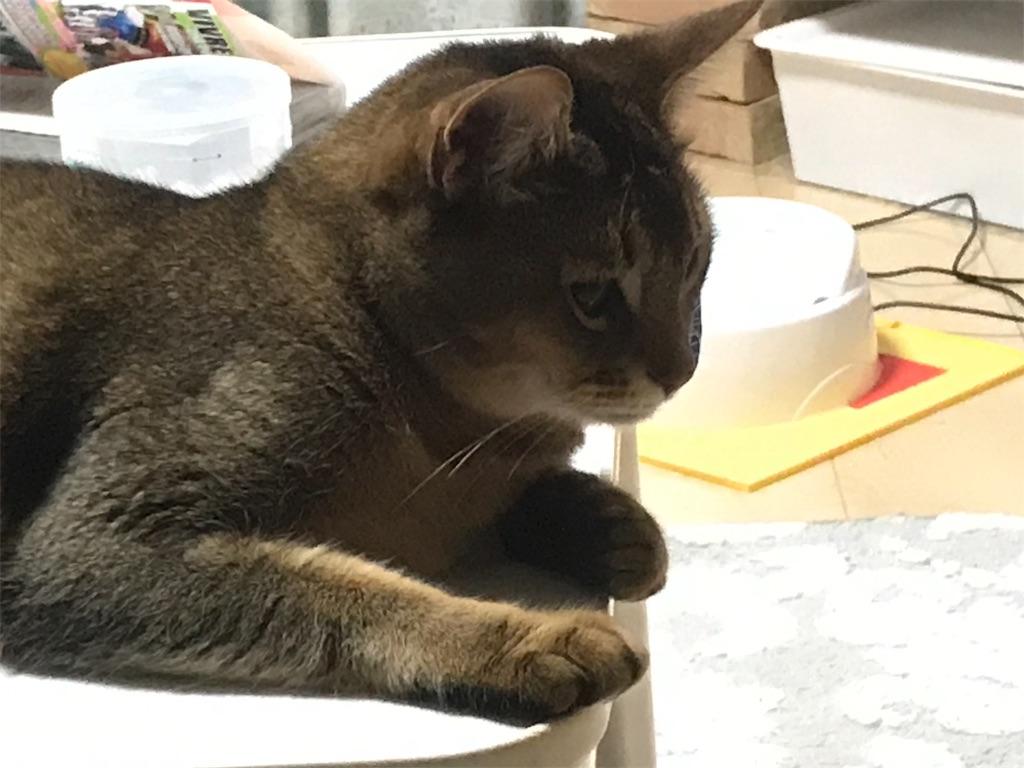 f:id:sea-cat0718:20190306230205j:image
