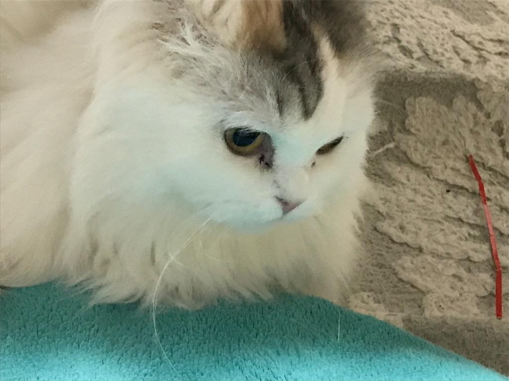 f:id:sea-cat0718:20190320044354j:image