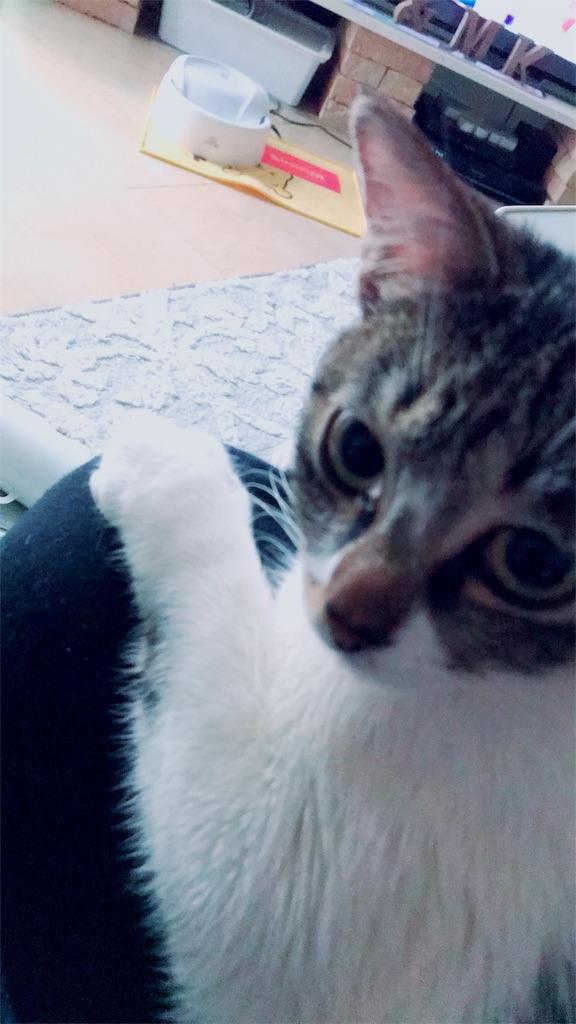 f:id:sea-cat0718:20190320045818j:image