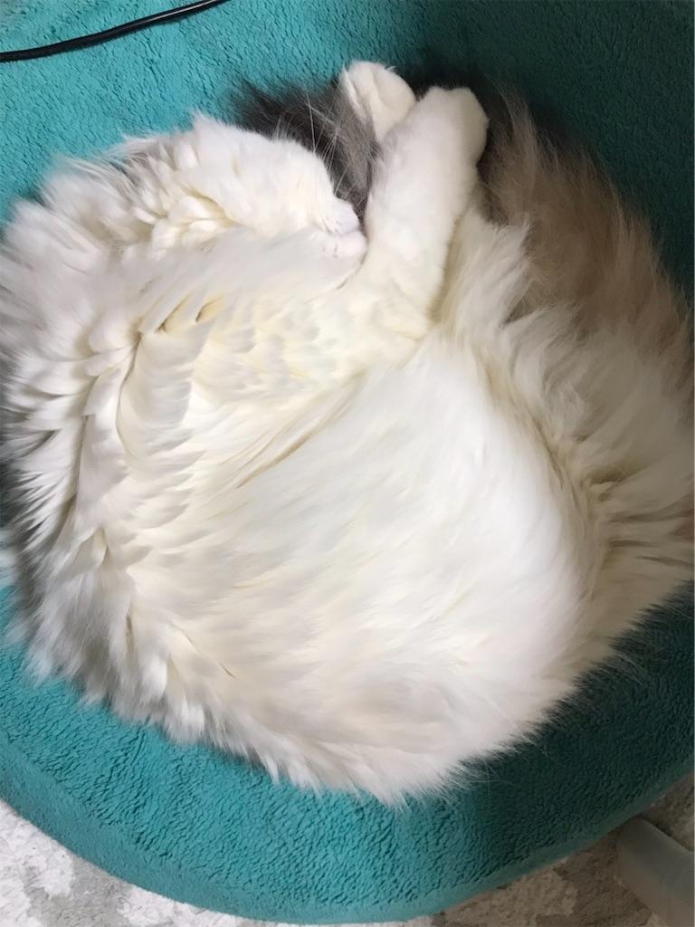 f:id:sea-cat0718:20190419205406j:image