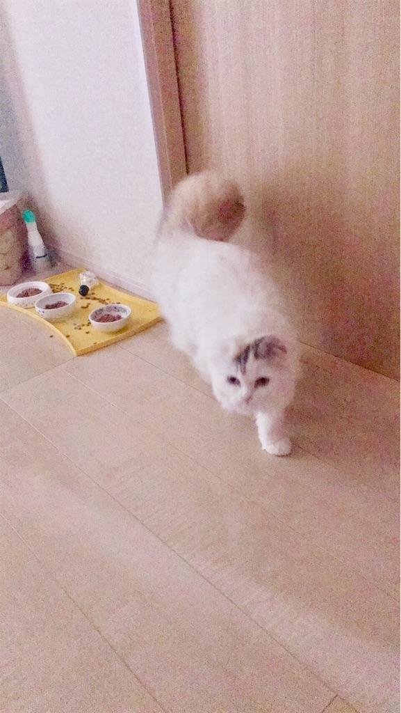f:id:sea-cat0718:20190424111328j:image