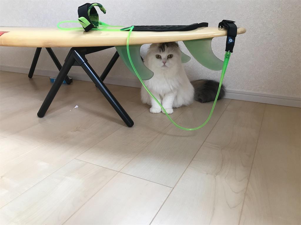 f:id:sea-cat0718:20190506175737j:image