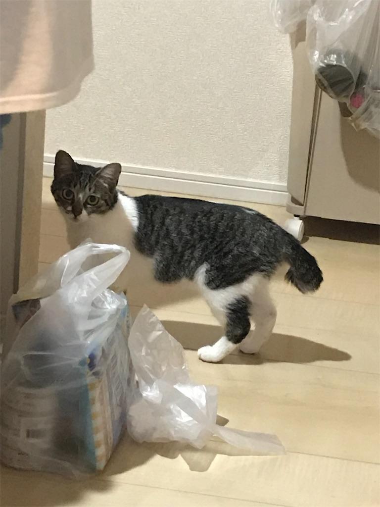 f:id:sea-cat0718:20190525202125j:image
