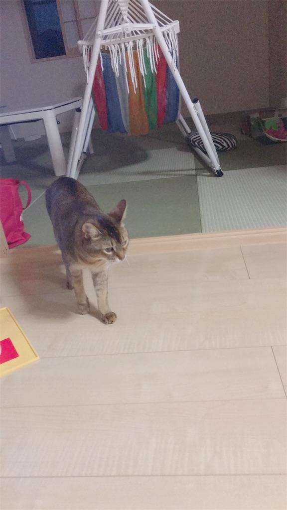 f:id:sea-cat0718:20190526223653j:image