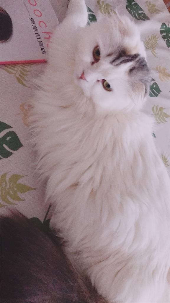 f:id:sea-cat0718:20190607174155j:image