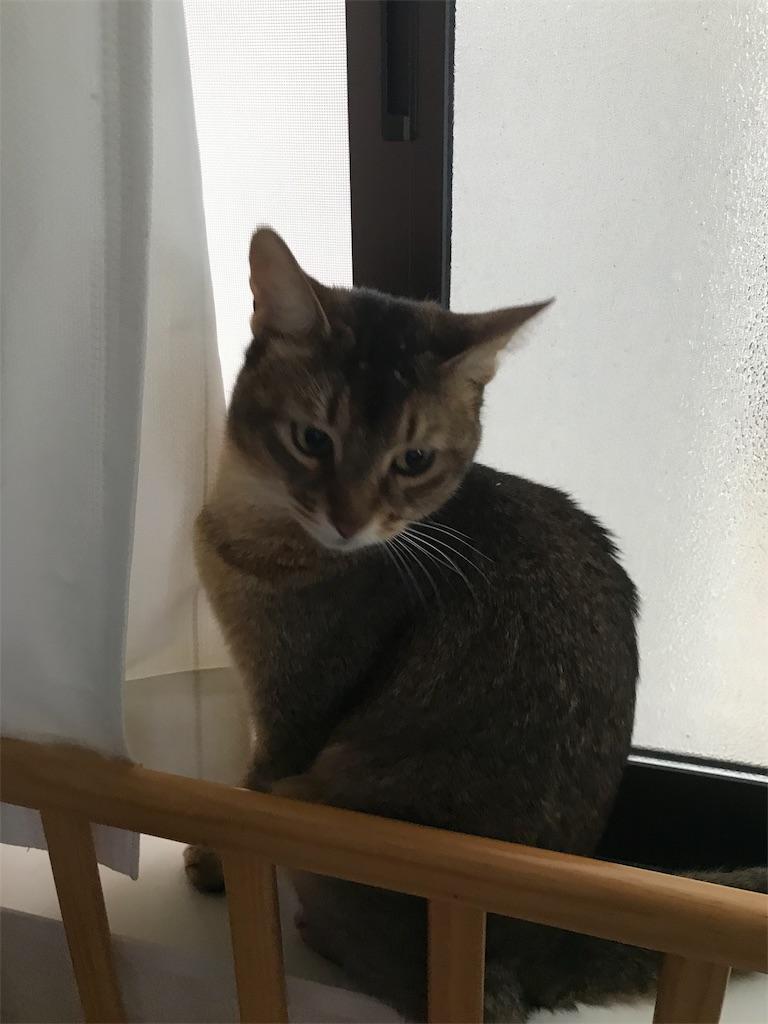 f:id:sea-cat0718:20190617172314j:image