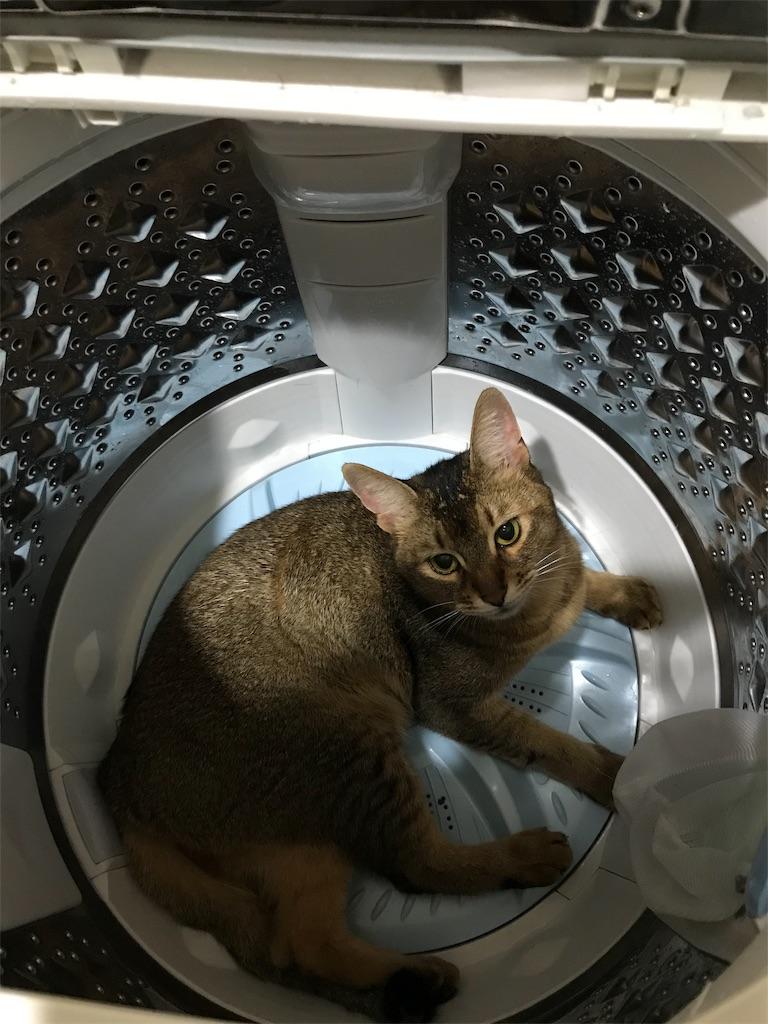 f:id:sea-cat0718:20190704143410j:image