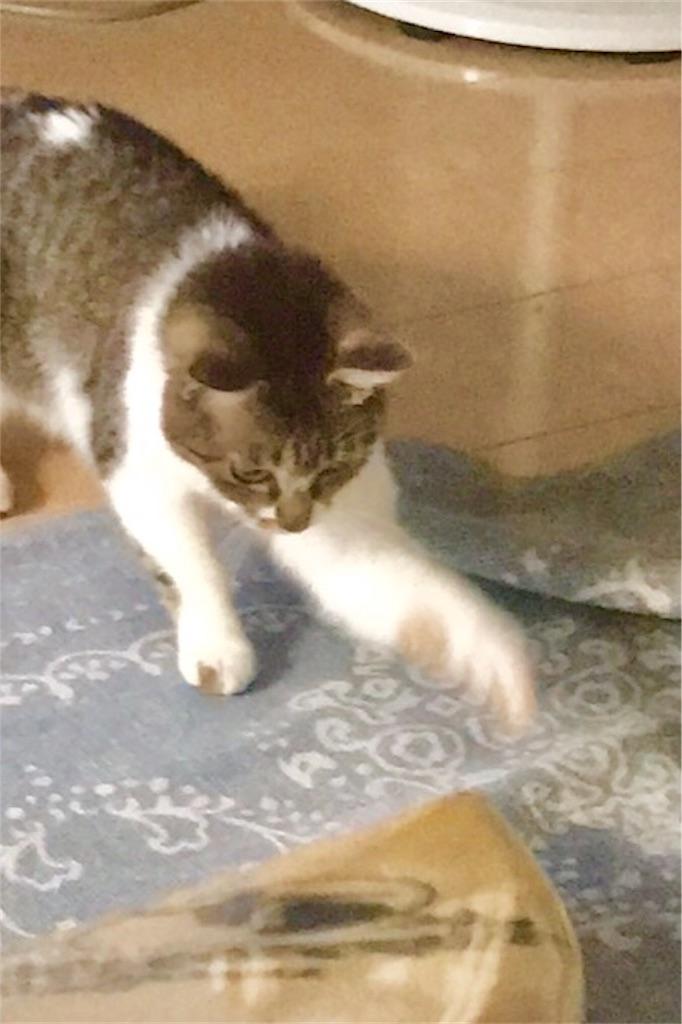 f:id:sea-cat0718:20190730203738j:plain