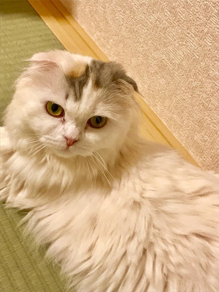 f:id:sea-cat0718:20190730204116j:image