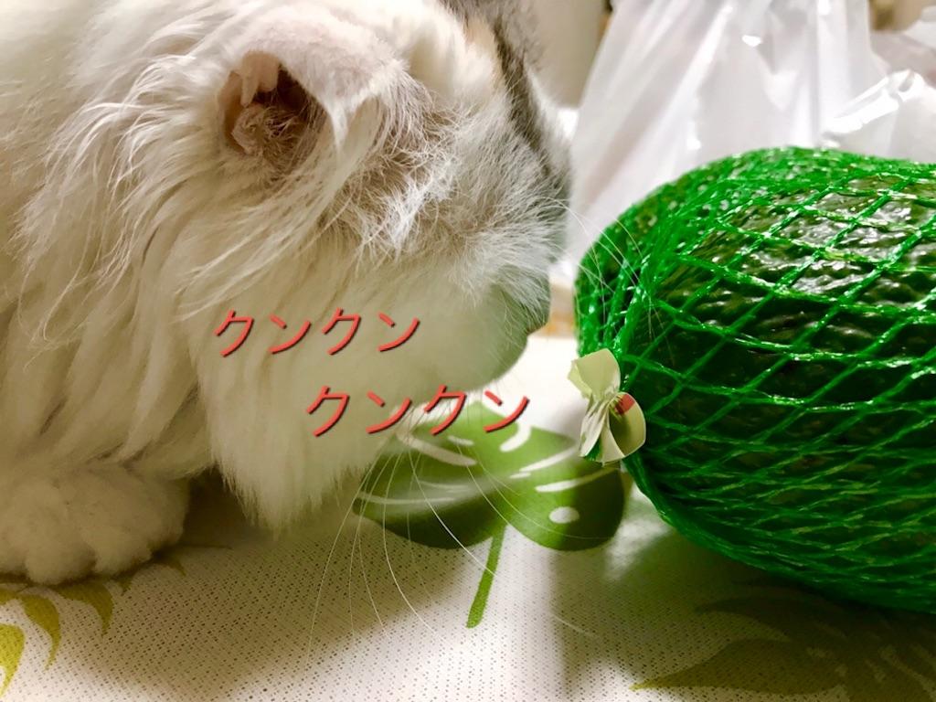 f:id:sea-cat0718:20190913162011j:image