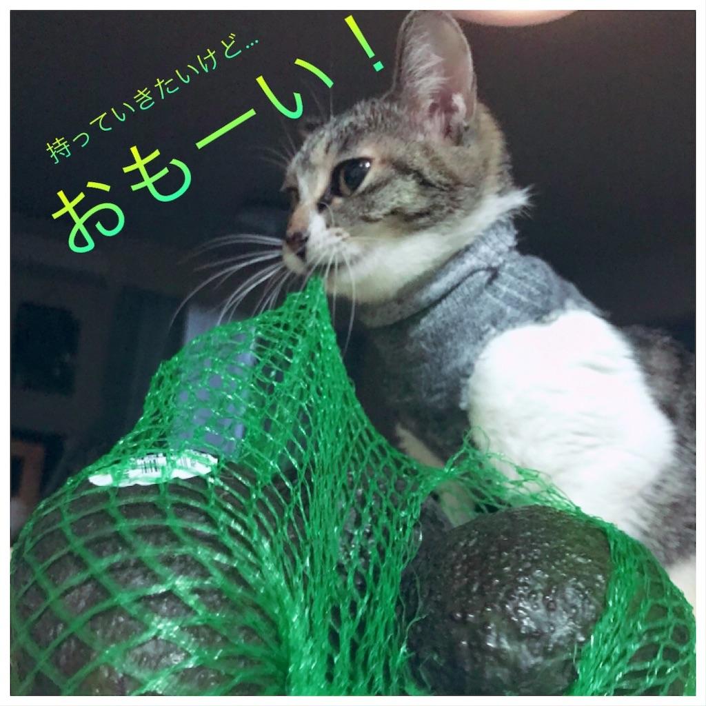 f:id:sea-cat0718:20190916114517j:image