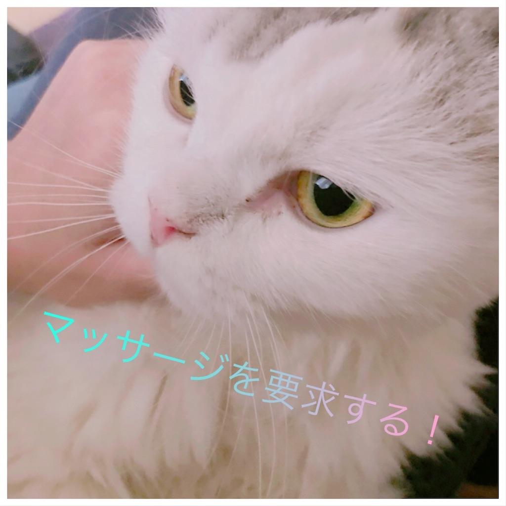 f:id:sea-cat0718:20190916114704j:image
