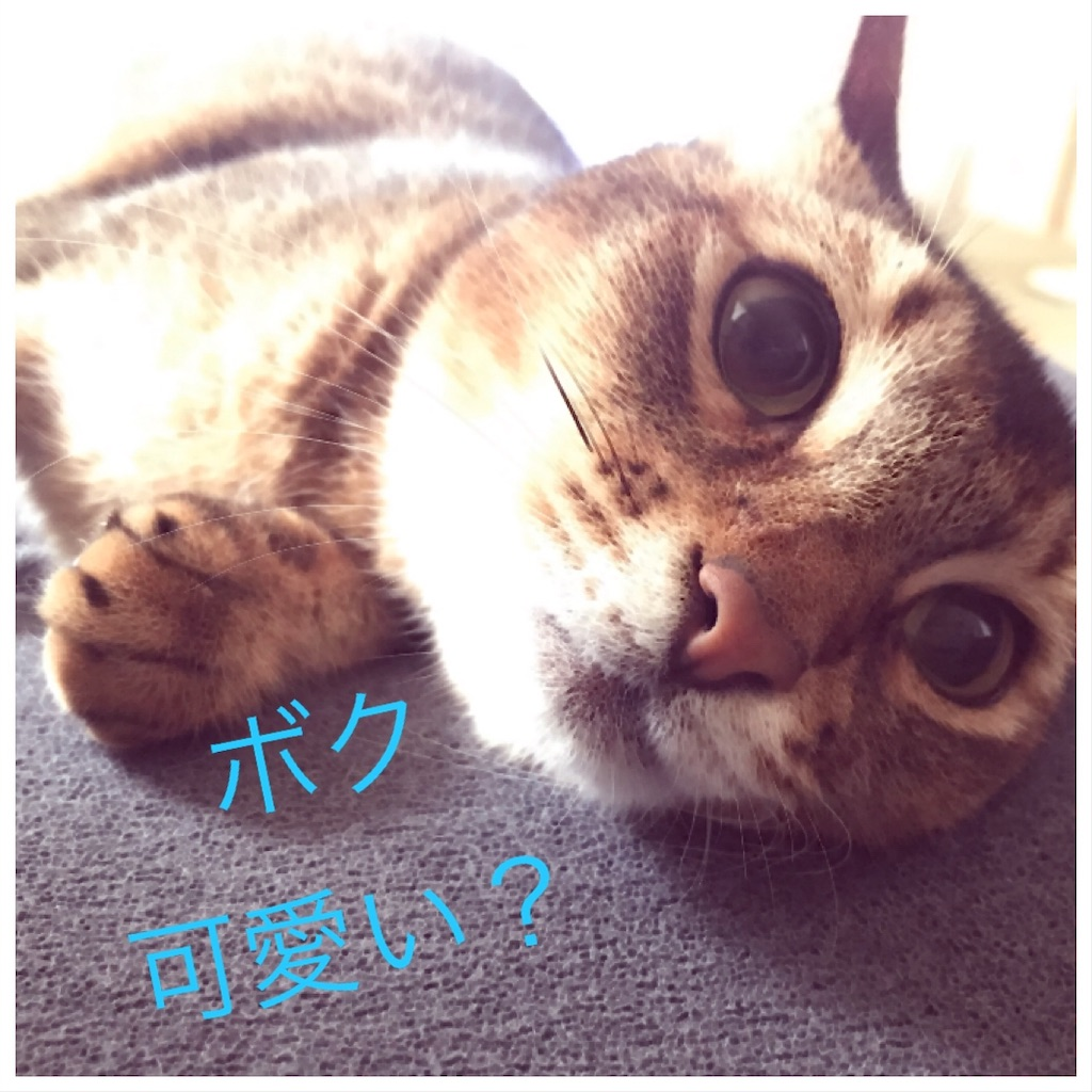 f:id:sea-cat0718:20190916114744j:image