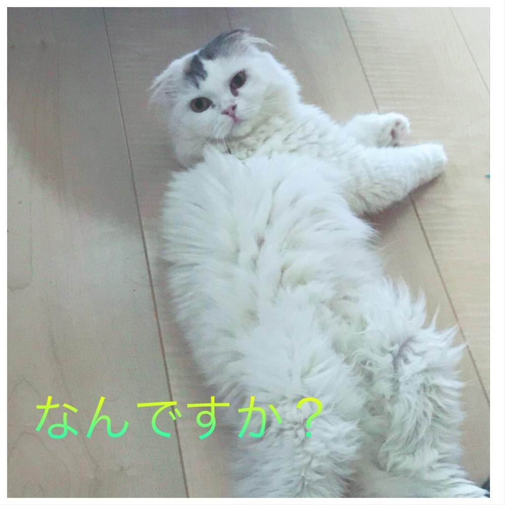 f:id:sea-cat0718:20190924102836j:image