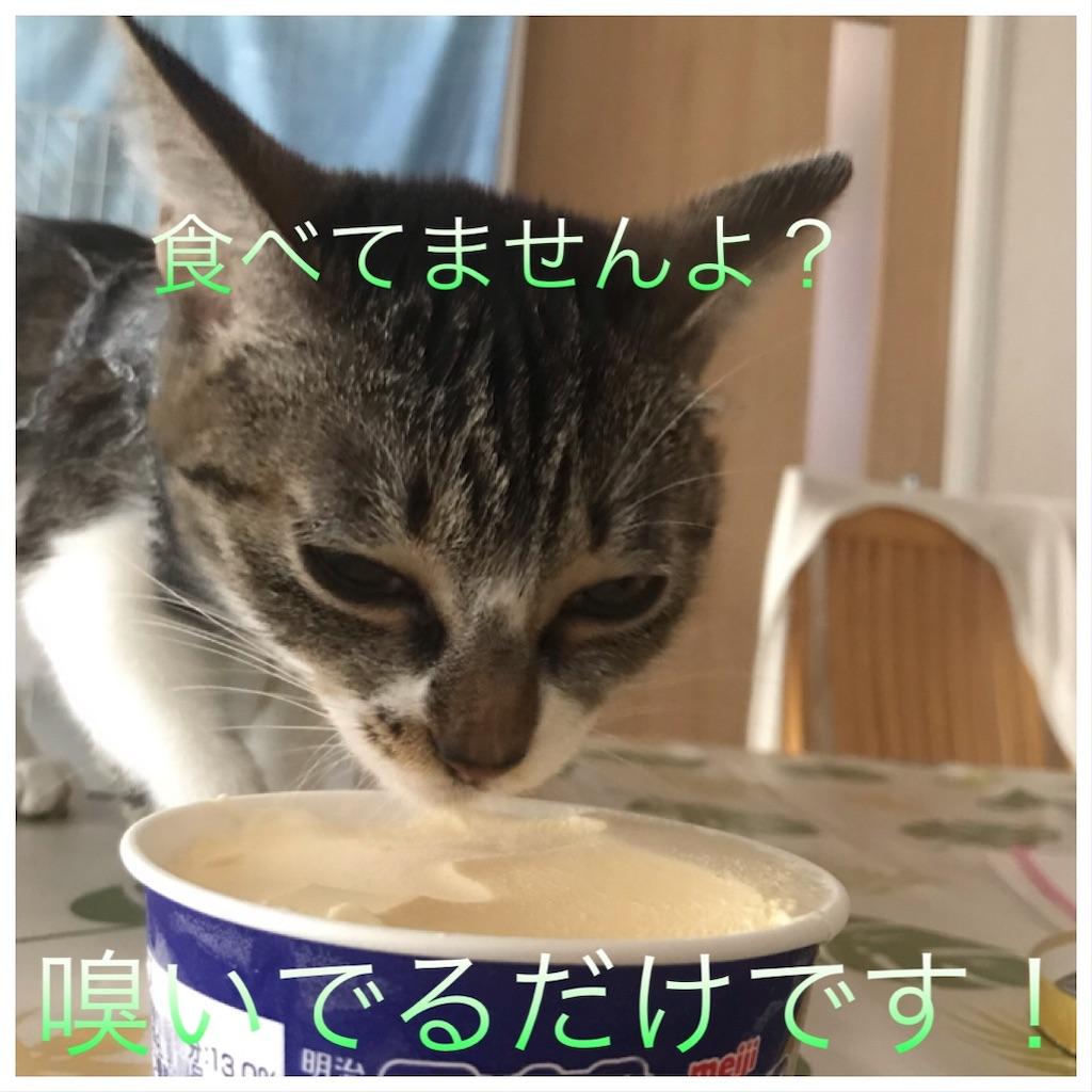 f:id:sea-cat0718:20190924102906j:image