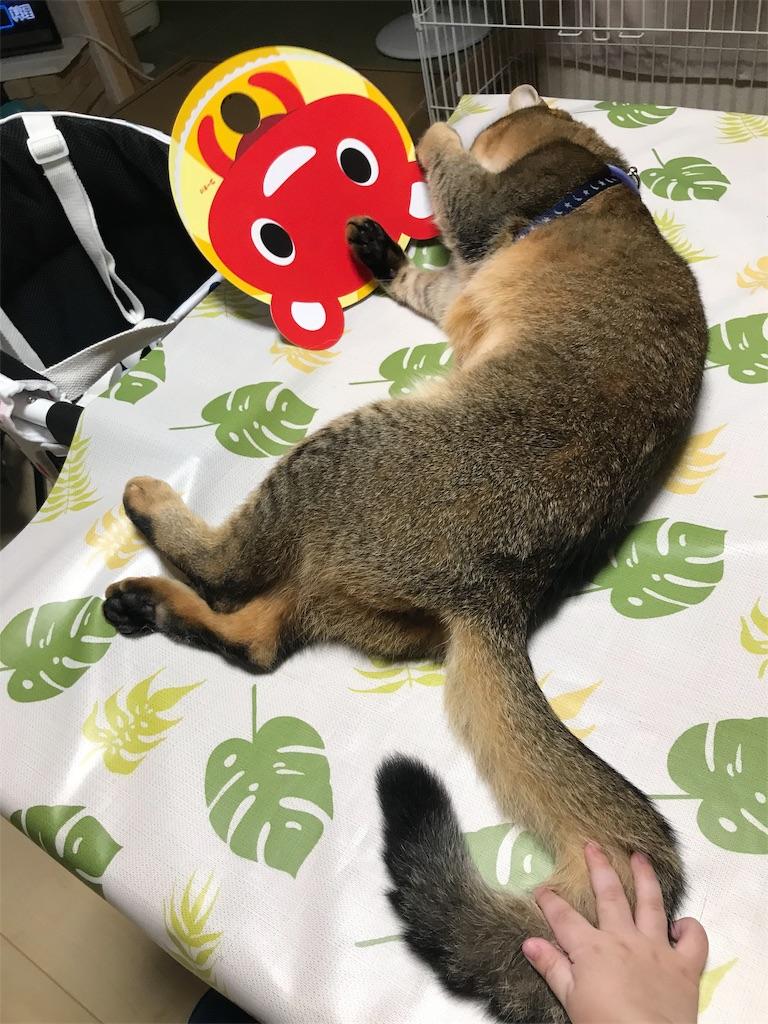 f:id:sea-cat0718:20191003200422j:image