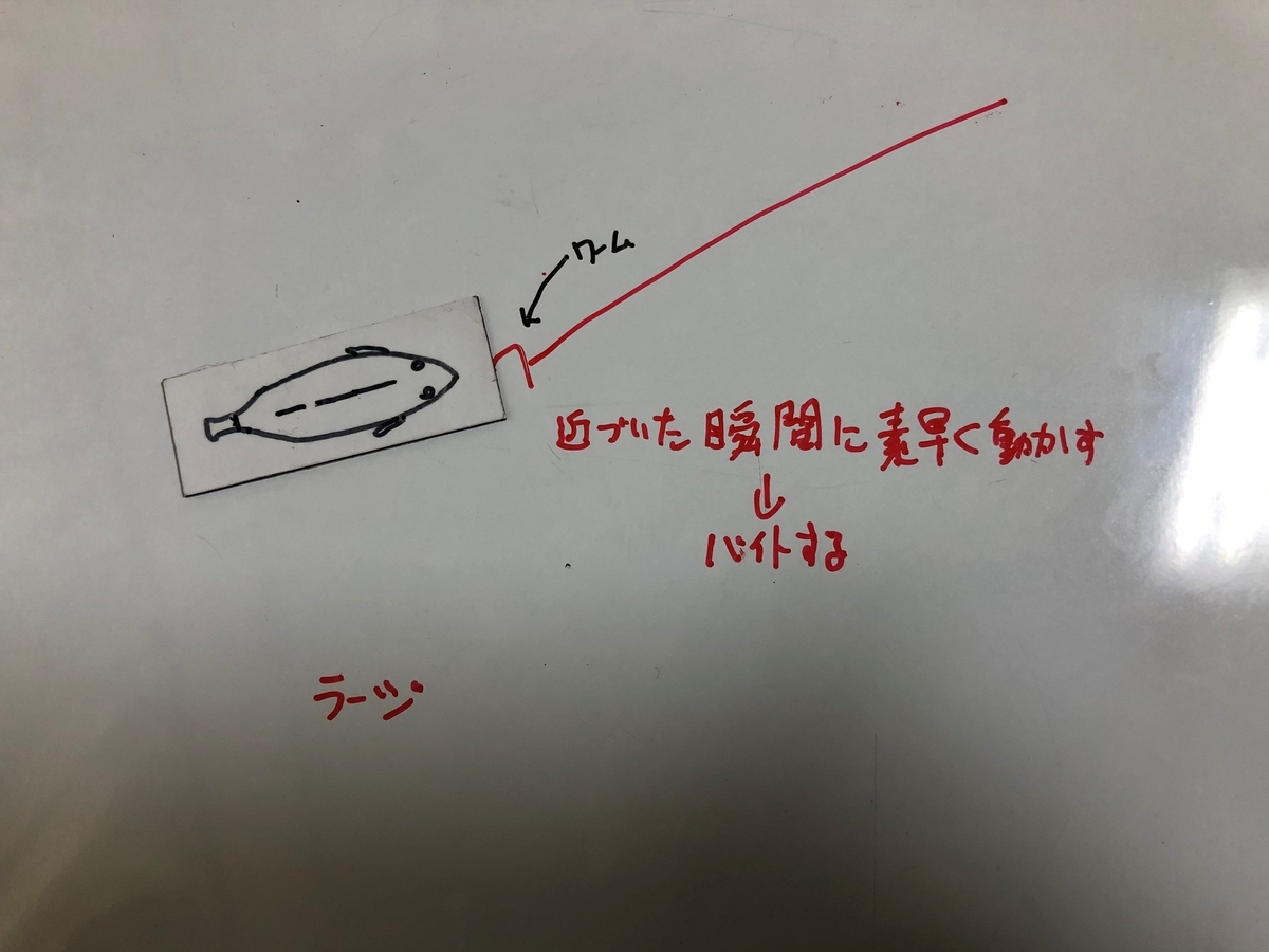 f:id:seabass-advantage:20200429175037j:plain