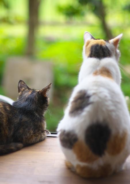 f:id:seabird-kitty:20160905190254j:plain