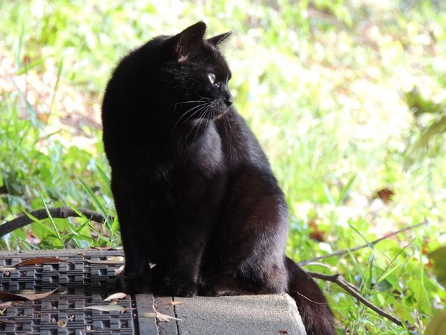 f:id:seabird-kitty:20161003105424j:plain