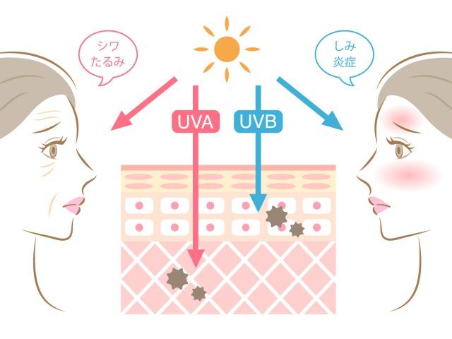 紫外線と女性の肌