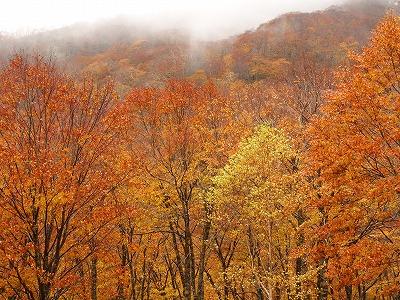 f:id:seasonsgreetings:20201103025813j:plain