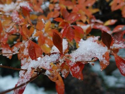 f:id:seasonsgreetings:20210323000619j:plain