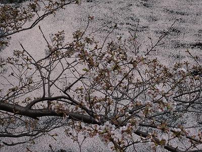 f:id:seasonsgreetings:20210323021903j:plain