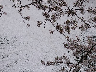 f:id:seasonsgreetings:20210323021931j:plain