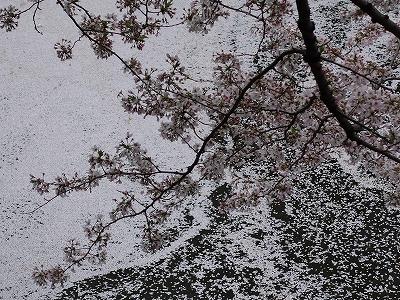 f:id:seasonsgreetings:20210323021935j:plain