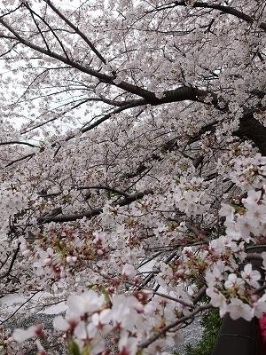 f:id:seasonsgreetings:20210323021944j:plain