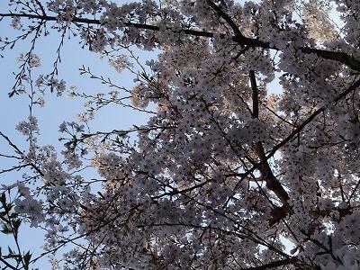 f:id:seasonsgreetings:20210328001724j:plain