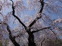 f:id:seasonsgreetings:20210504010450j:plain
