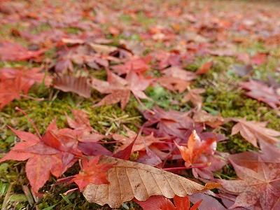 f:id:seasonsgreetings:20210930230108j:plain