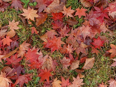 f:id:seasonsgreetings:20210930230110j:plain