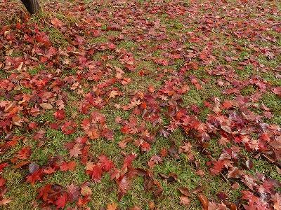 f:id:seasonsgreetings:20210930230219j:plain