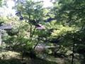 [twitter] 南禅寺、池がいい
