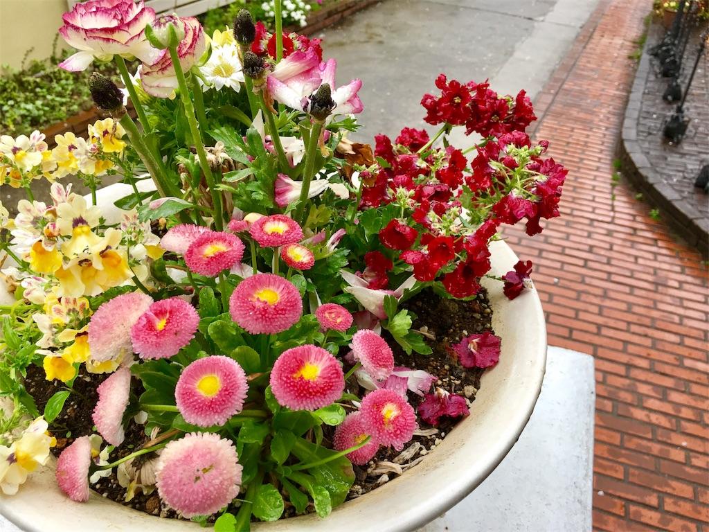 横浜公園のお花