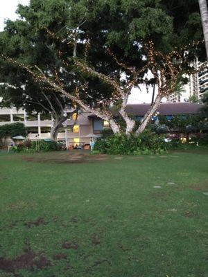 アラモアナビーチパークの大きな木