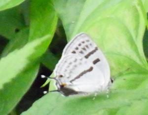 f:id:segawabiki:20110612212419j:image